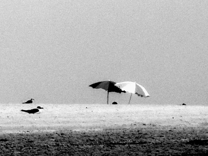 B&W Umbrellas