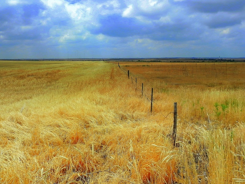 Wheat Fence Line