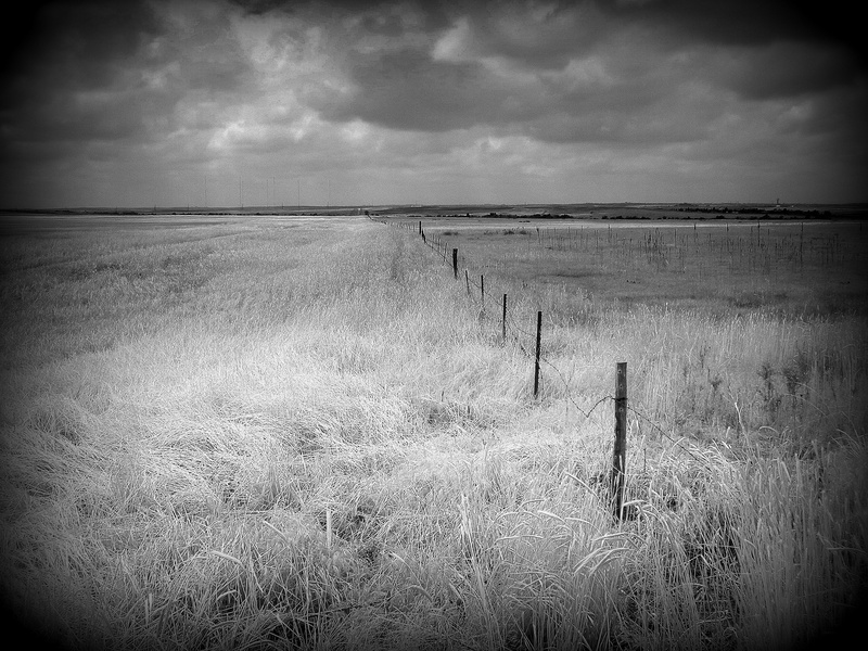 Wheat Fence Line BW